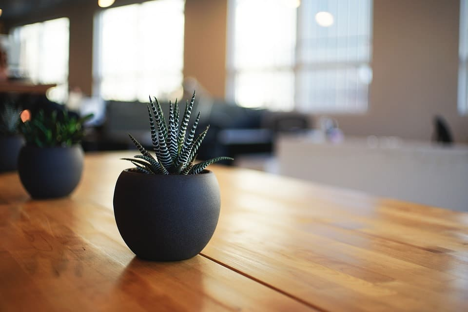 Best Indoor Plants for Your Home Decorating Attempts