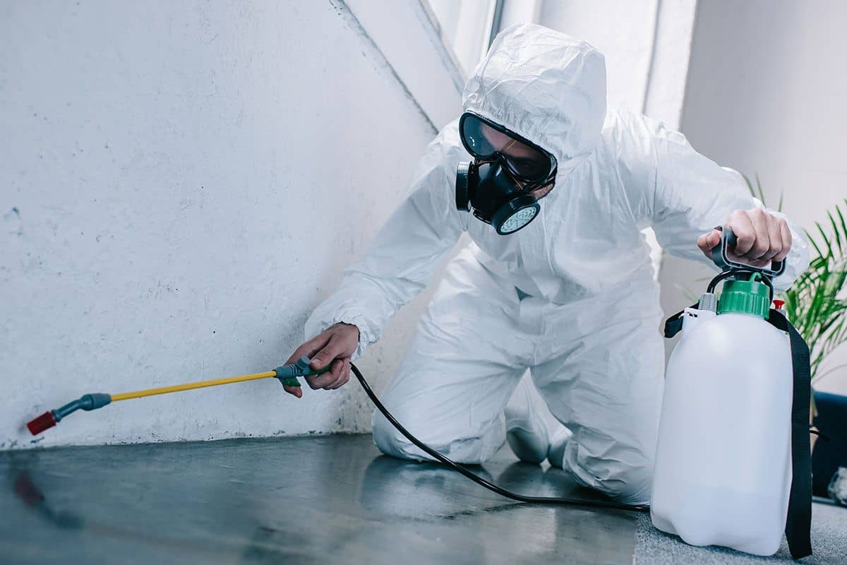 Empire Pest Control Services In London For Same Day Pest Removal