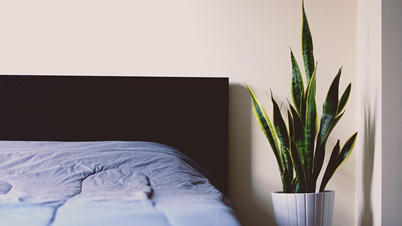 The 5 Houseplants to Include in Bedroom Interior Design