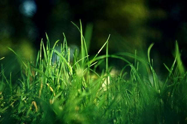 10 Facts About Lawns You Probably Didn't Know